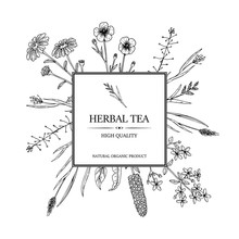 Herbal Tea Design For Package And Advertisement. Hand Drawn Summer Wild Flowers Frame. Vector Illustration In Sketch Stile