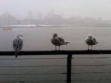 Seagulls Perching On Pier Railing During Monsoon