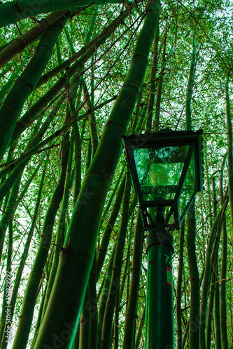 Photographie Low Angle View Of Bamboos And Lamp Post At Forest