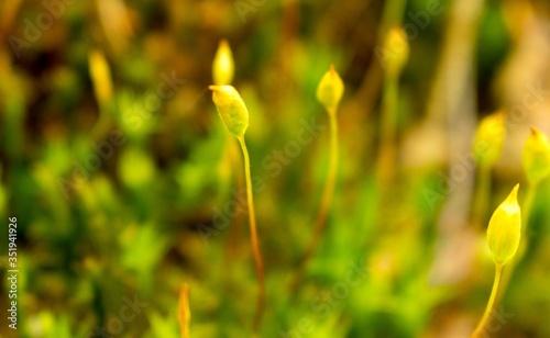Obraz Mech zielony zbliżenie makro - fototapety do salonu