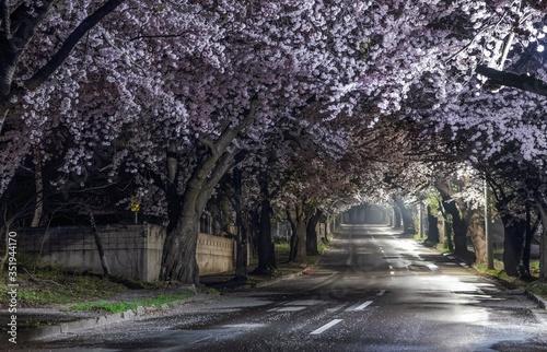 Foto Cherry Blossom Trees Along Empty Road