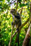 wild monkey in jungle