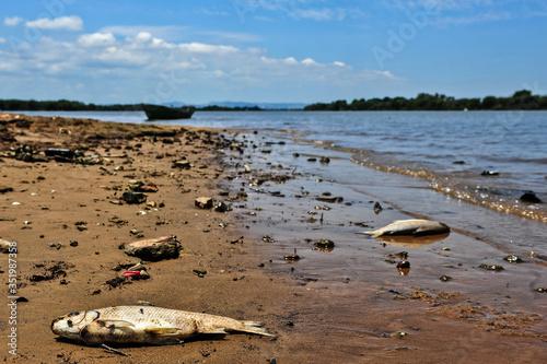 Dead fish washed ashore a river. Wallpaper Mural