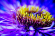 canvas print picture - Close-up Of Purple Flower Blooming Outdoors