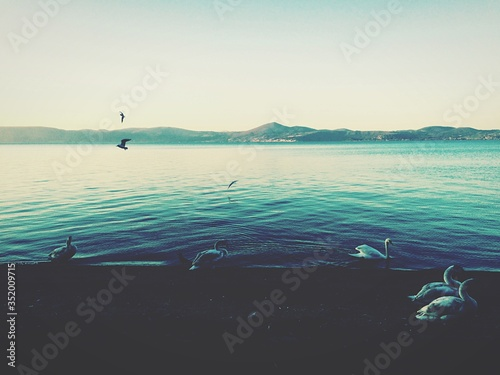 Valokuvatapetti View Of Birds Perching At Lakeside