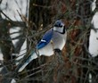 Close-up Of Bird Perching On Branch In Winter