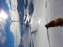 Rear View Of Dog Sitting On Snowcapped Landscape Against Sky