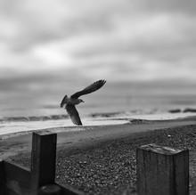 Seagull Flying Above Beach