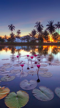 Lotus Water Lily Flowing In Lake Against Sky During Sunset
