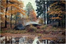 Footbridge In Forest During Autumn