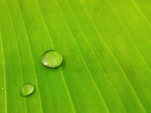 Full Frame Shot Of Banana Leaf With Water Drops