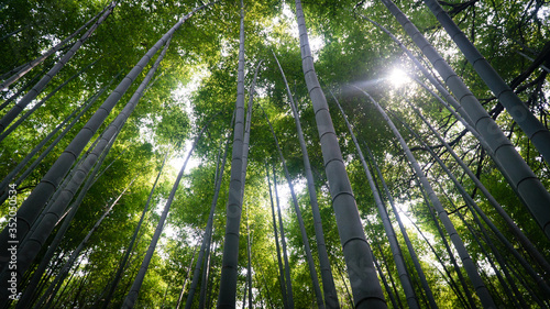Tableau sur Toile Low Angle View Of Bamboos