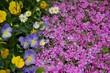 Leinwanddruck Bild - Full Frame Of Purple Flowers