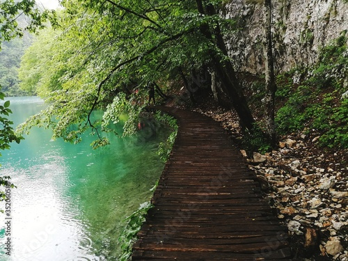 Fototapety, obrazy: Footpath Amidst Trees In Forest