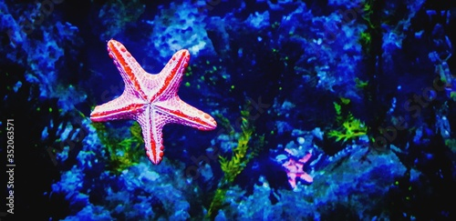 Carta da parati Close-up Of Starfish In Sea