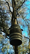 Low Angle View Of Wooden Barrel Hanging From Tree