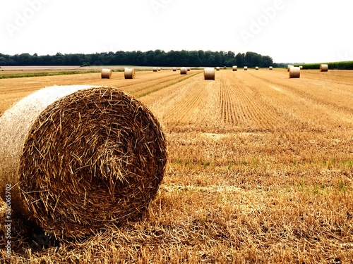Canvastavla Hay Bales On Field Against Clear Sky