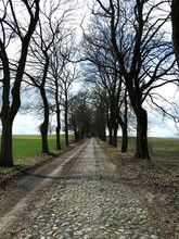 Empty Road Passing Through Tree-lined Field