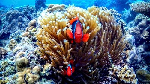 Fotografering Clown Fish And Sea Anemones In Sea