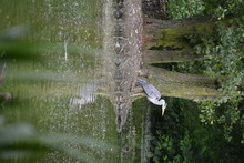 Great Blue Heron Perching At Lakeshore