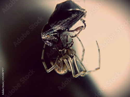 Close-up Of Spider With Prey On Web Fototapeta