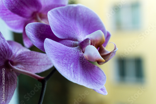 Fototapeta Close-up Of Purple Orchids Blooming Outdoors