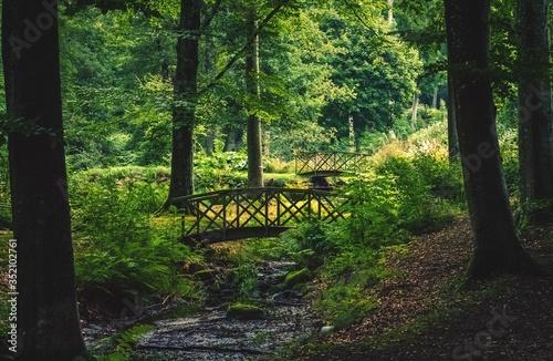 Photo Footbridge Amidst Trees In Woodland