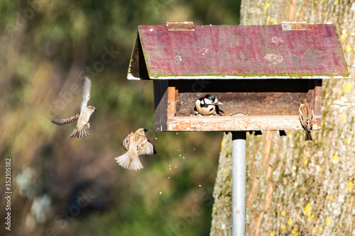 Close-up Of Birds Flying By Birdhouse Fotobehang