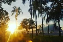 Sunlight Streaming Through Pal...