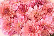 Full Frame Shot Of Pink Dahlia Flowers
