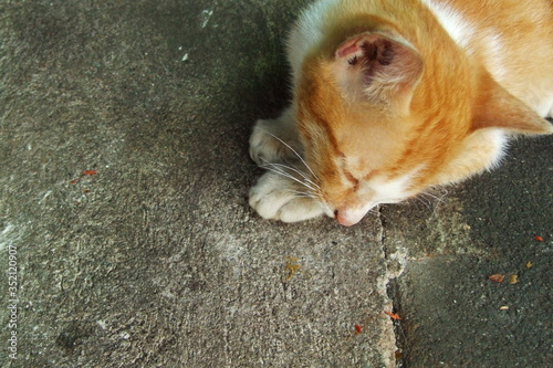Fotografiet High Angle View Of Ginger Cat Sitting On Road