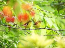 Sunbirds Perching On Branch