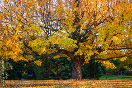 Fototapety, obrazy: Close-up Of Tree In Autumn