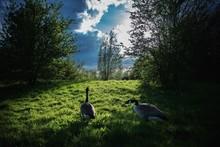 View Of Ducks In Field