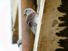 Low Angle View Of Pigeon Perching On Building