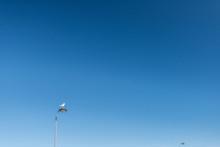 Sea Gull Sitting On A Lamp Pos...