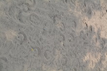High Angle View Of Horse Footprints At Field