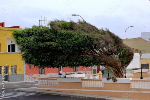 Fotografija Windswept Tree