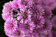 canvas print picture - Close-up Of Purple Flowers