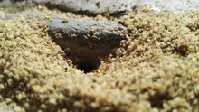 Close-up Of Ant Hole On Sand