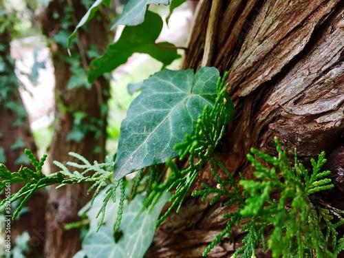 Fotografie, Tablou Close-up Of Fresh Green Plant