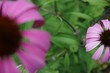 Leinwanddruck Bild - Close-up Of Pink Flower