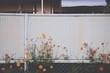 Flowers Growing Against Fence In Yard