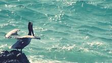 Pelican On Rock By Sea
