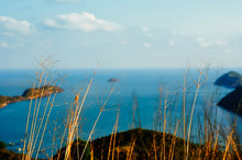 Dry Plants Against Blue Sea