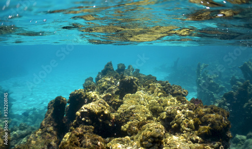 images of the world under the sea, in the caribbean sea Canvas Print