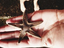 Close-up Of Hand Holding Starf...