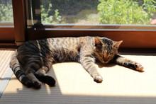 窓辺で眠る猫 sleeping ...