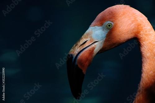 Close-up Of Flamingo Fototapete