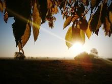 Autumn Tree On Field Against Sky On Sunny Day